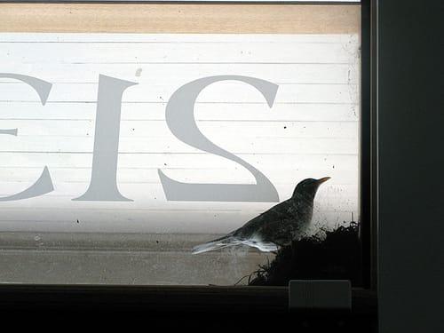 a bird told me