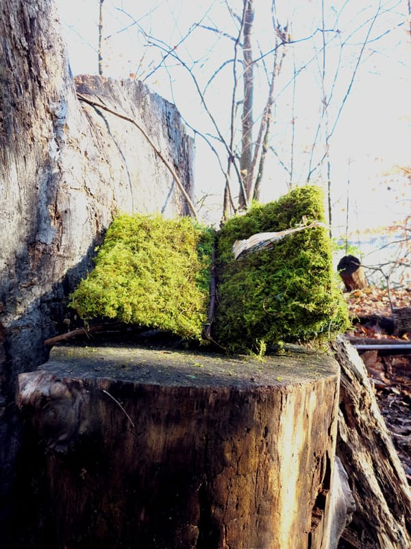 Field Guides: Book of Moss