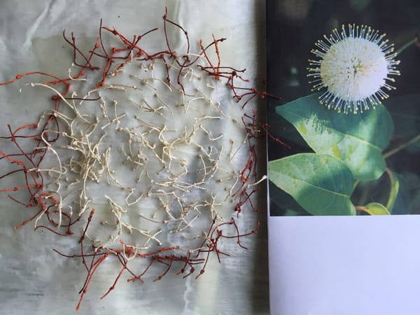 buttonbush-inspiration