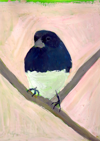 Day 9:Dark-eyed Junco