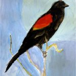 Day 1: Red-Winged Blackbird