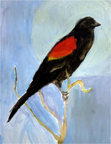 Day 1: Red-Winged Blackbird
