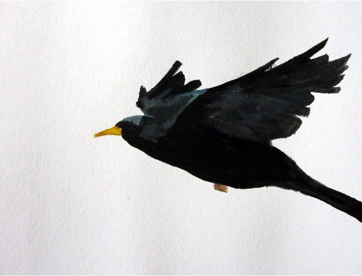 Day 21: Blackbird