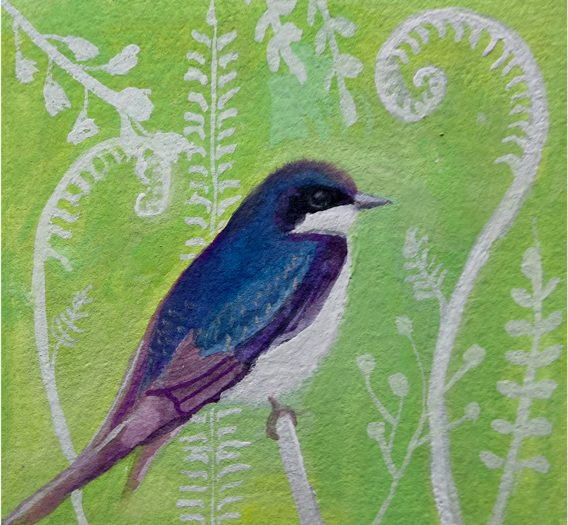 Day 49: Tree Swallow