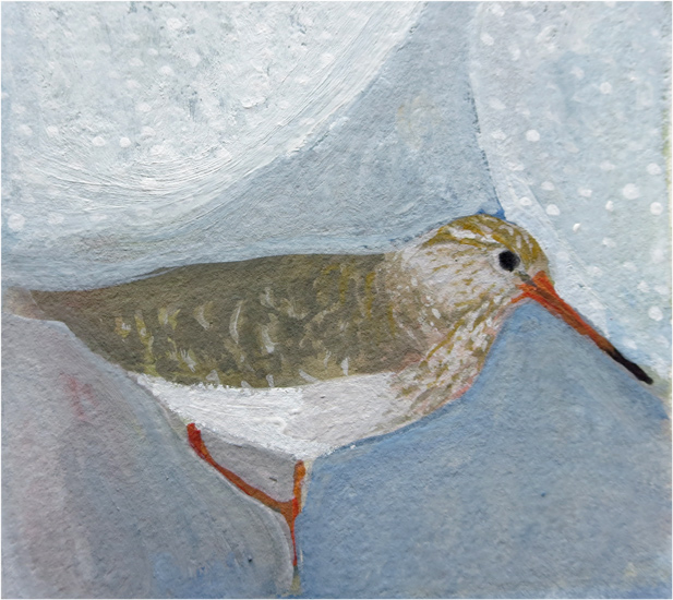 No. 52: Common Redshank