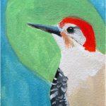 No 53: Red-bellied Woodpecker