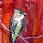 No. 78: Olive-sided Flycatcher