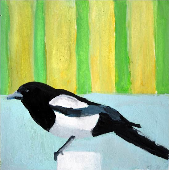 No. 80: Black-billed Magpie