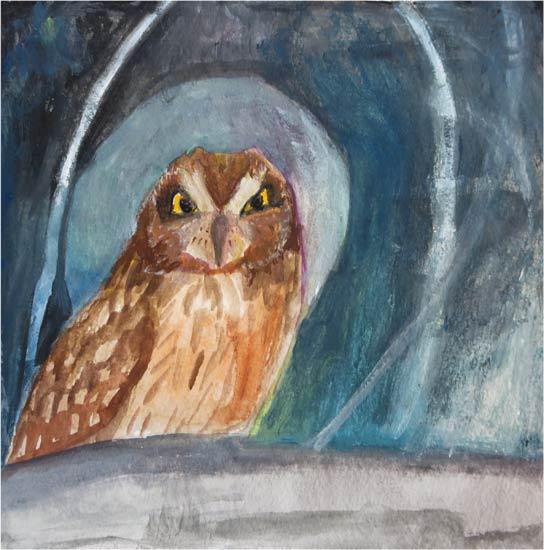 no. 89: Short-eared Owl