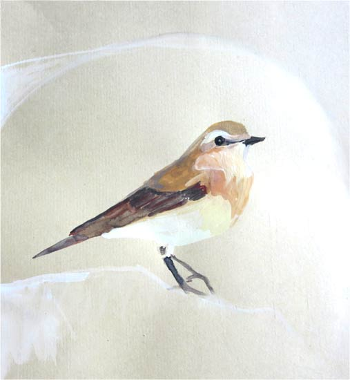 No. 91: Northern Wheatear